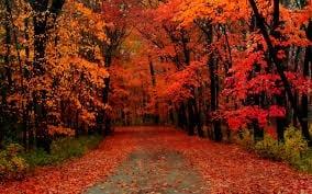 Autumn+Colors.jpgAutumn+Colors