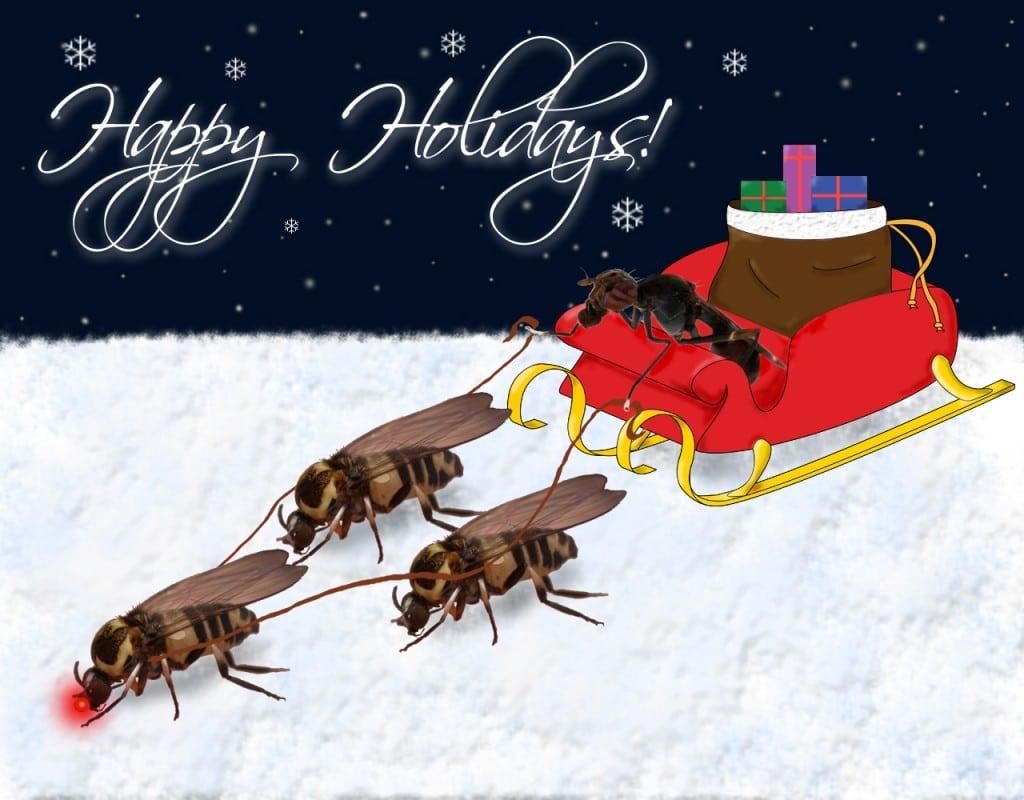 Fly+Reindeer.jpgFly+Reindeer