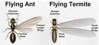 termite+versus+ant.jpgtermite+versus+ant