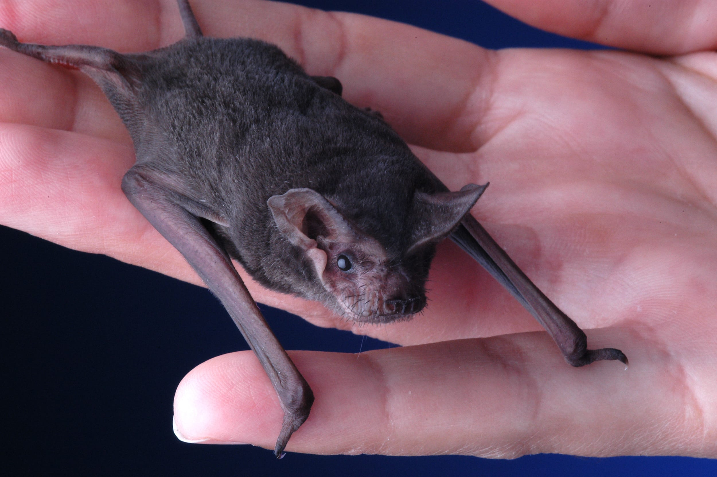 Bat.jpgBat