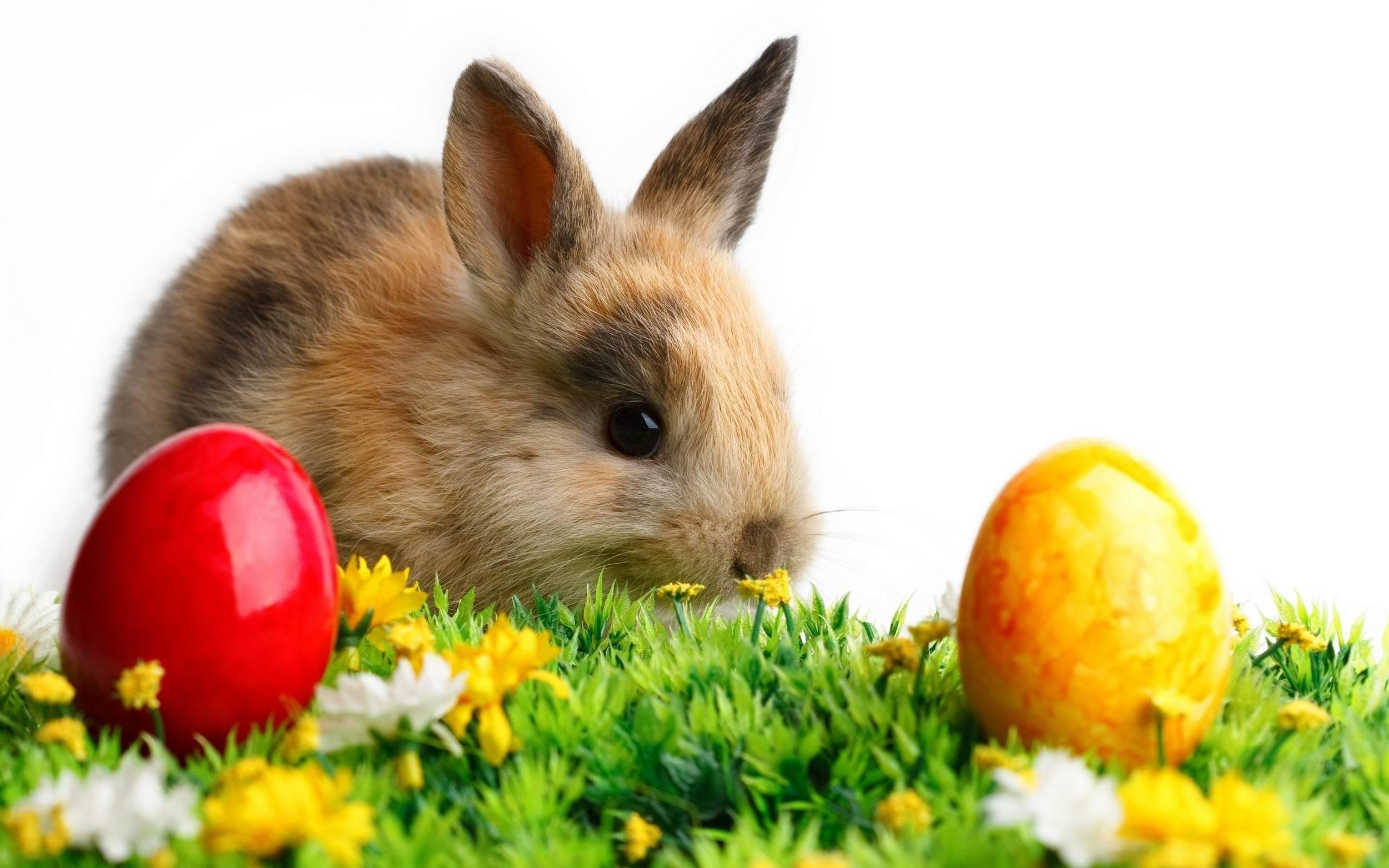 Cute+Bunny.jpgCute+Bunny