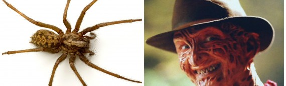 Why Spiders Are Scarier Than Freddy Krueger