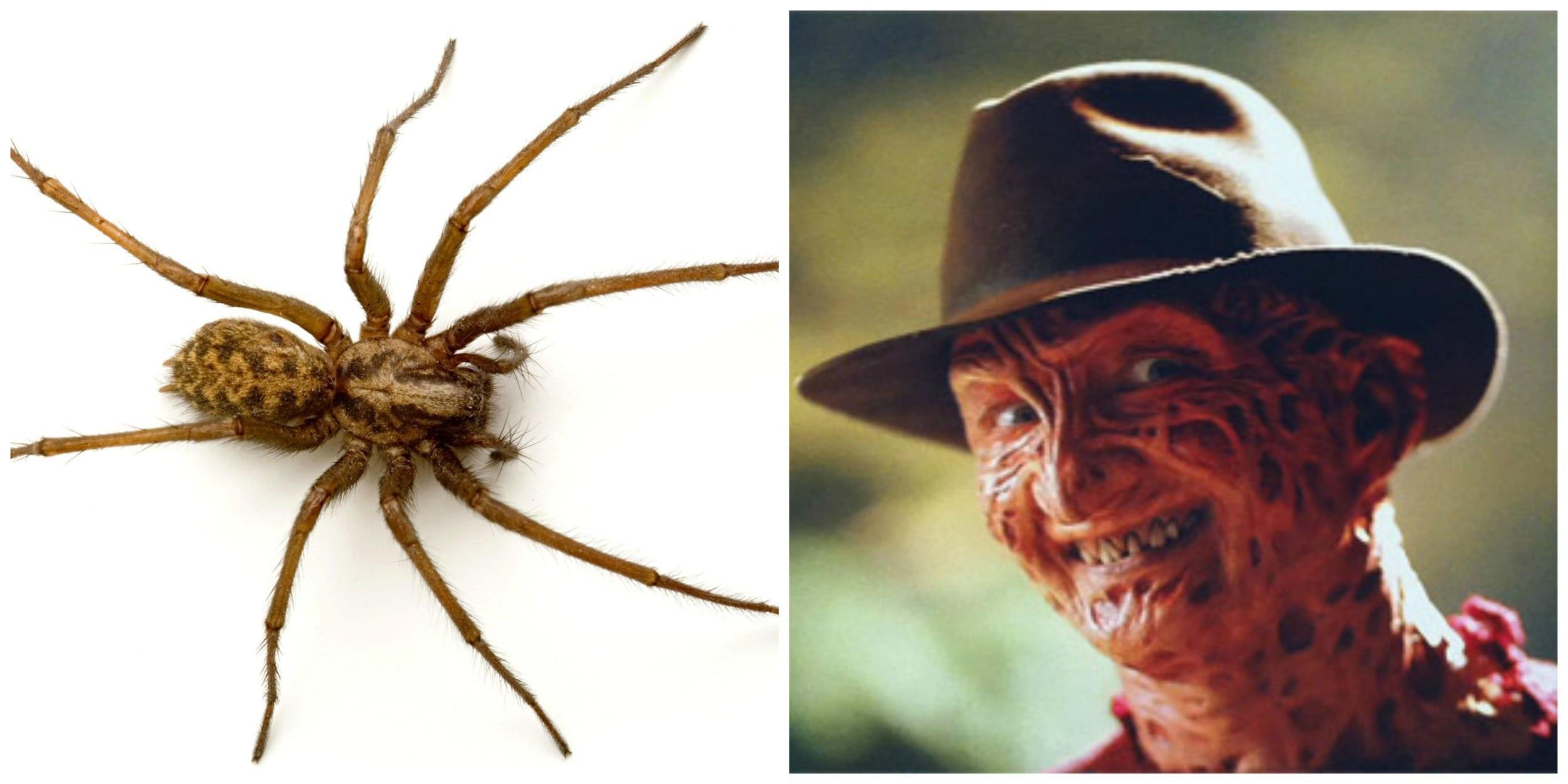 Spider+&+Freddy+Krueger.jpgSpider+&+Freddy+Krueger