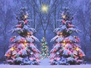 Outdoor+Christmas+Trees.jpgOutdoor+Christmas+Trees