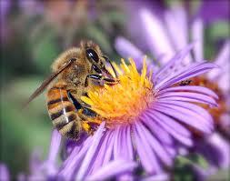 Bee+on+a+Flower.jpgBee+on+a+Flower