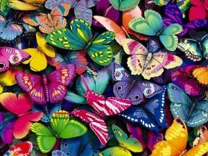 Butterflies.jpgButterflies