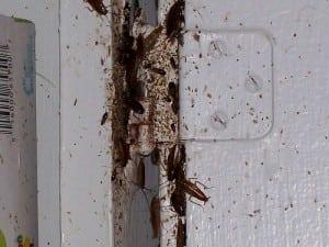 Roaches+in+a+Door+Frame.jpgRoaches+in+a+Door+Frame