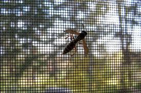 Wasp+On+Window+Screen.jpgWasp+On+Window+Screen
