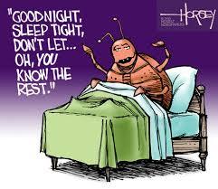 bed+bug