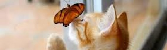 10 Insightful Quotes About Insects